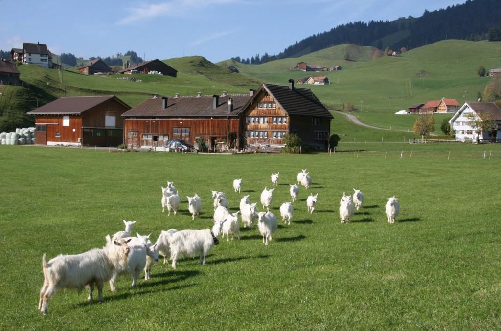 Quelles sont les modalités du bail rural ?2