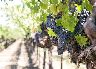 domaine viticole